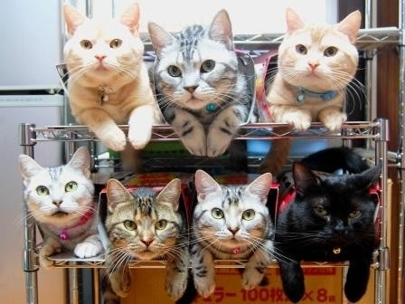 What cat lover doesn't want multiple cats. Lining them up might be a bit of a challenge though.