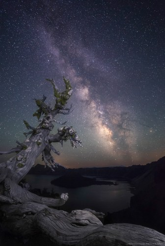 """Equilibrium,"" a whitebark pine hangs on the rim of Crater Lake by its roots, while the Milky Way spins overhead."