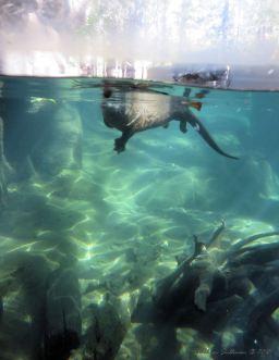 OtterhalfWater C