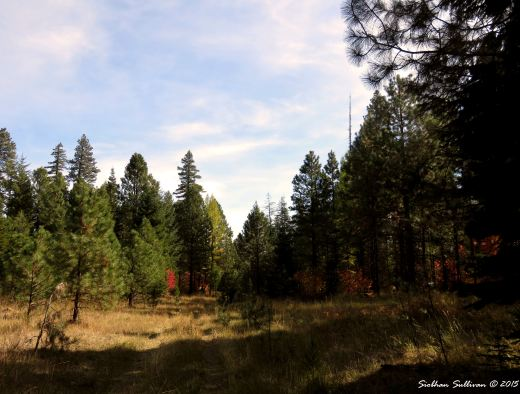 Metolius Preserve Hike Forest