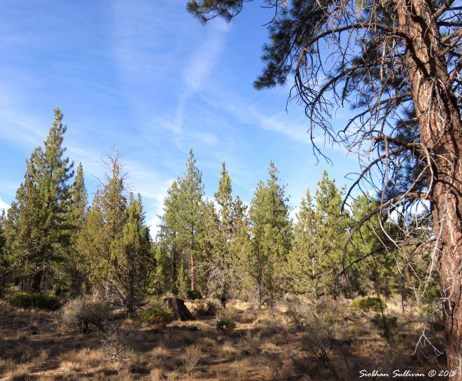Skyline forest habitat