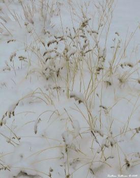 Snow2 11-24-2015