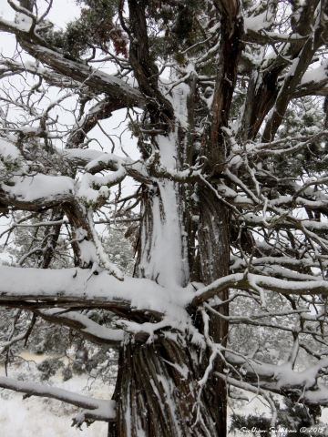 Snow5 11-24-2015