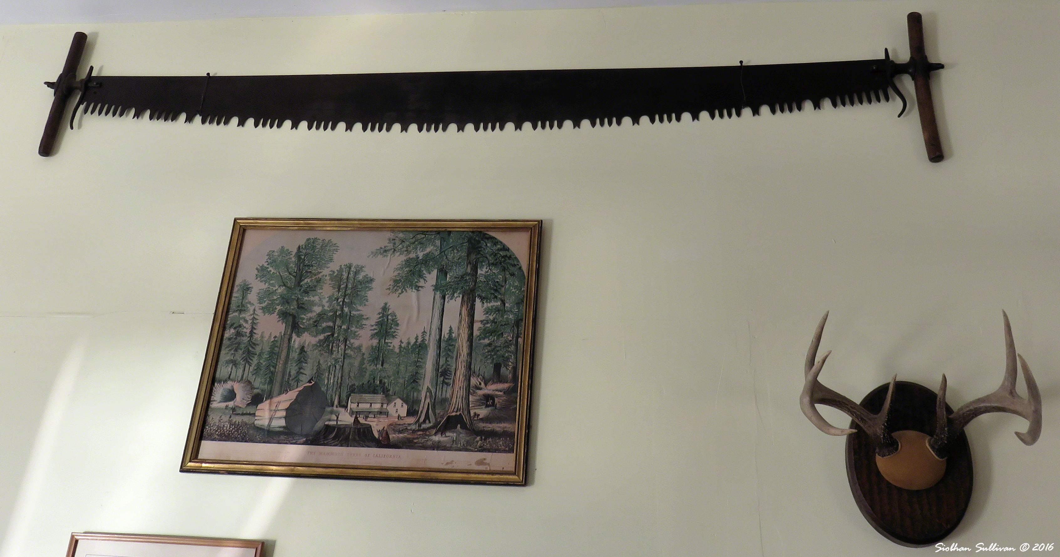 Antique whipsaw, logging print, & antlers