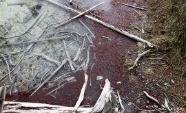 Textures Yellowstone NPk