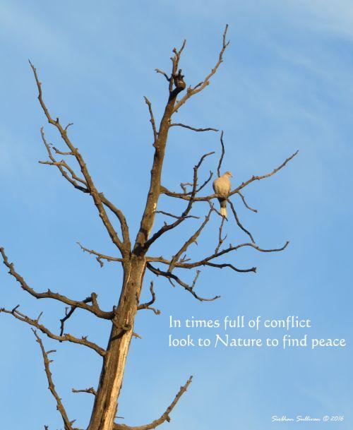 Peace Tree2 March2016 SiobhanSullivan