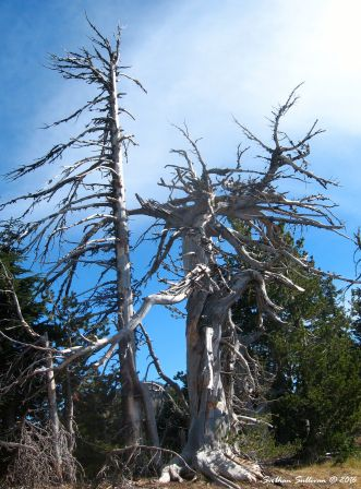 Sangs at Crater Lake, OR