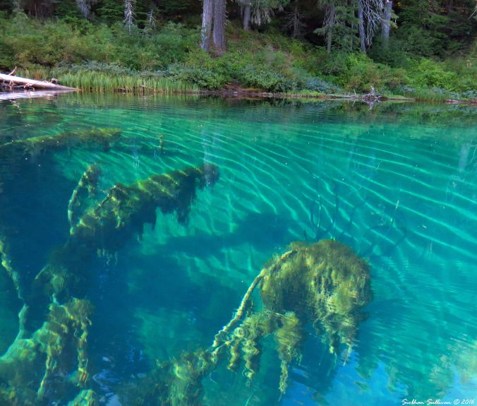 Clear Lake Underwater Forest 30Aug2016