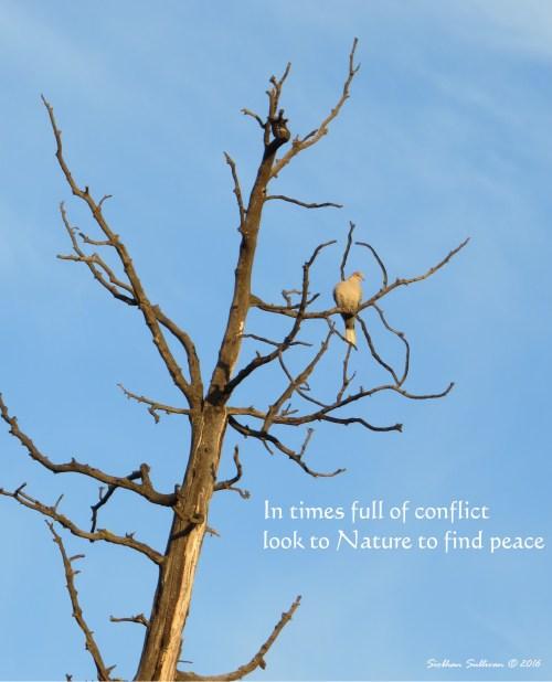 Peace Tree 2 November2016 SiobhanSullivan