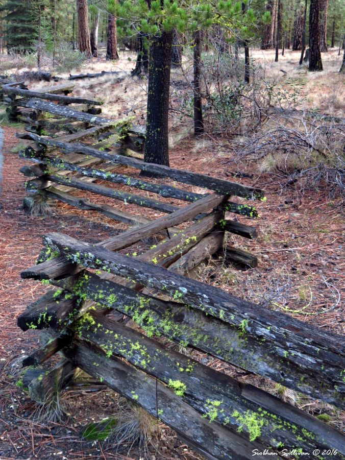 Zigzagging fence by Metolius River headwaters 27Nov2016