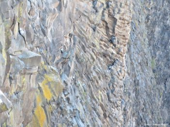 Cliff face at Peter Skene Ogden Scenic Viewpoint 3Apr2017