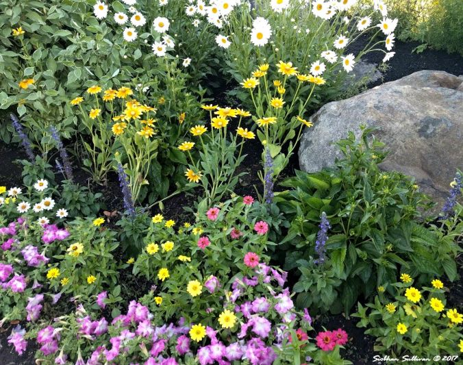 Flowers At Old Mill in Bend, Oregon 14July2017