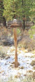 Signpost rubbed away by deer antlers 18November2017