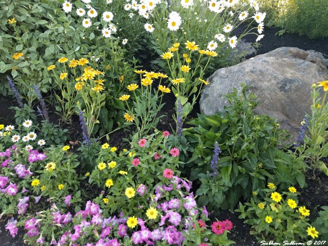 Flower border in the Old Mill District of Bend, Oregon 14July2017