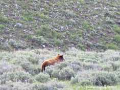 Yellowstone Favorite Places 4June2015