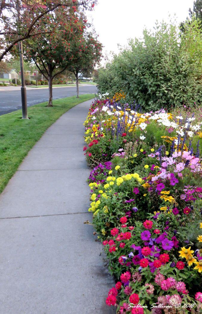 Flower Border at the Old Mill district of Bend, Oregon 14 September 2018