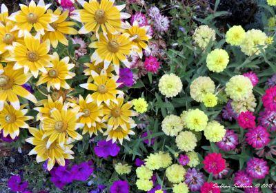 Flower Border 4 14 September 2018