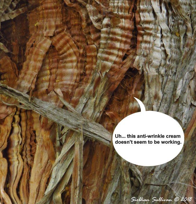 Fun Photos: Close up of western juniper bark, Bend, Oregon October 2018