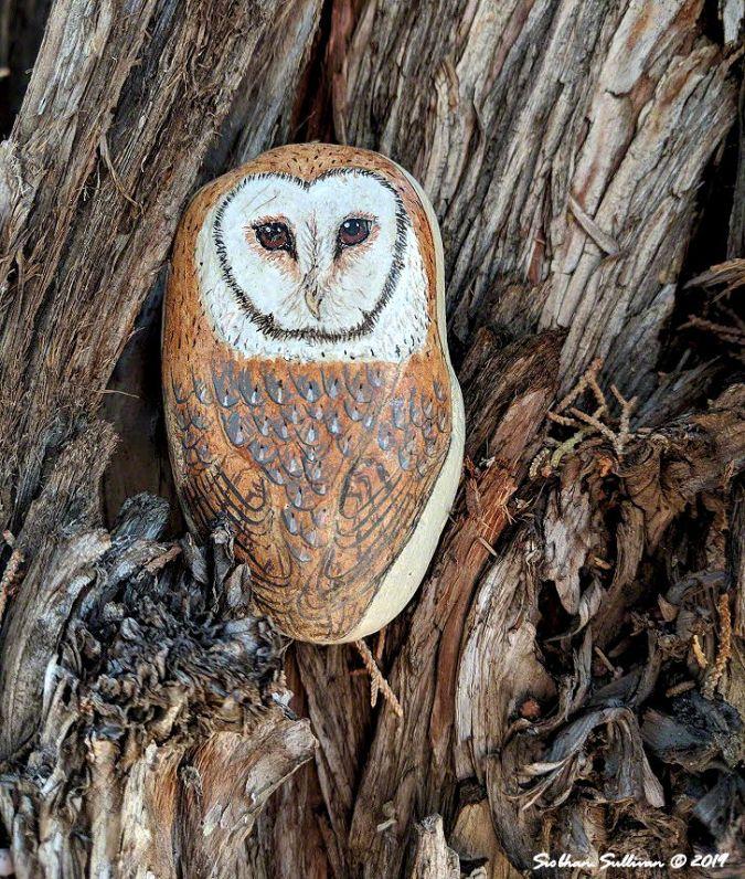 Pocket Barn Owl 31January2019