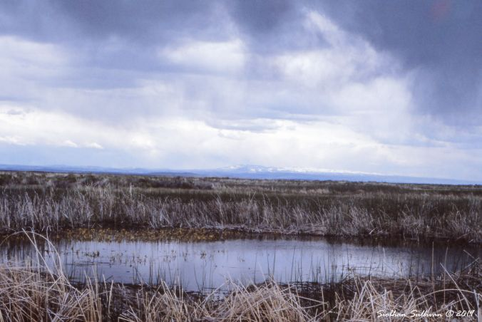 Marsh at Malheur NWR 10April2019