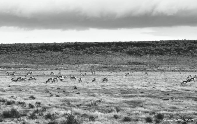 Where the pronghorn roam 1November2017