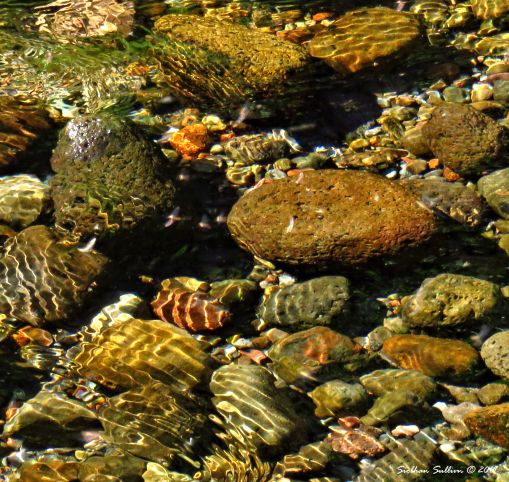 Favorite Rocks Metolius River, Oregon 24June2016