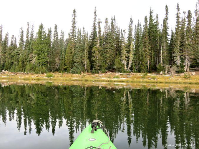 Finding serenity, Mule deer at Three Creek Lake, Oregon 24September2017