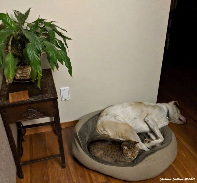 Cat and dog asleep together on one bed