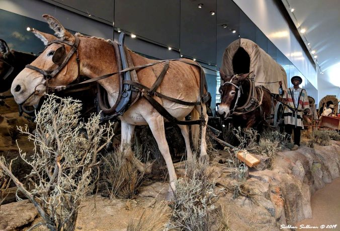 Mule team pulling a wagon, Oregon Trail Interpretive Center 24October2018