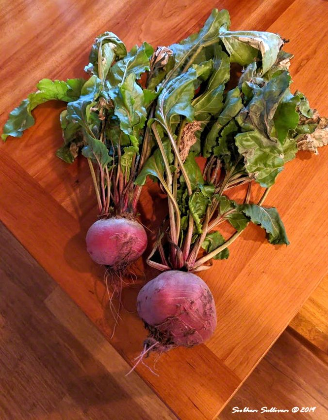 We got the Beet, Bend, Oregon 13 October 2019