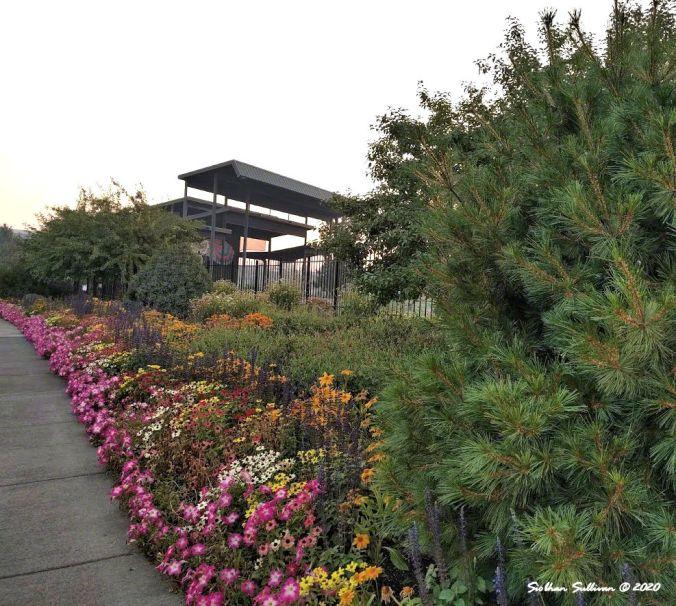 Flower border in Old Mill district of Bend, Oregon September 2017