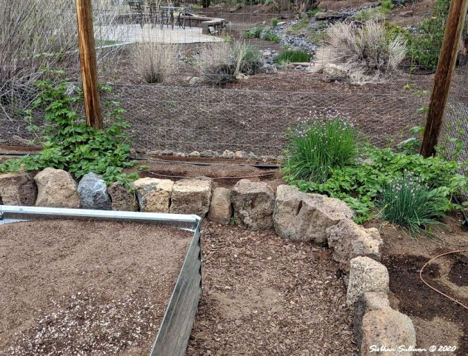 A rock border in a vegetable garden, Bend, Oregon May 2020