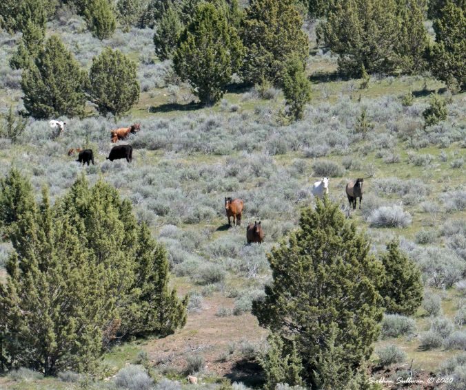 Residents of the range north of Burns Oregon May 2019