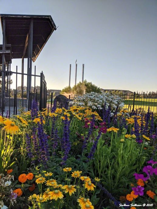 Silent symphony of flowers in Bend, Oregon August 2020