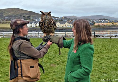Owl being held at Dingle Falconry Experience March 2020