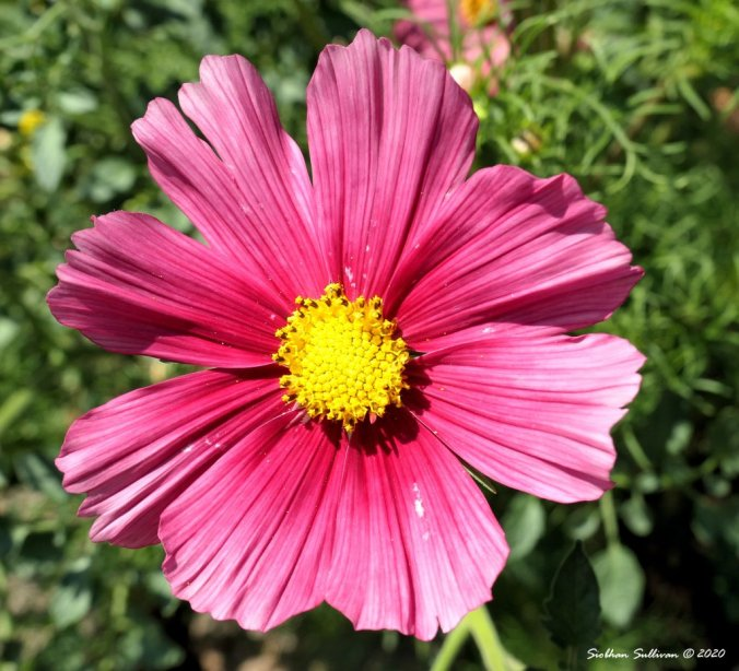 A blooming cosmos