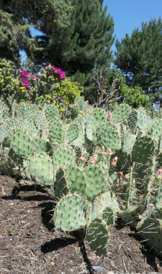 My cactus in summer July 2020
