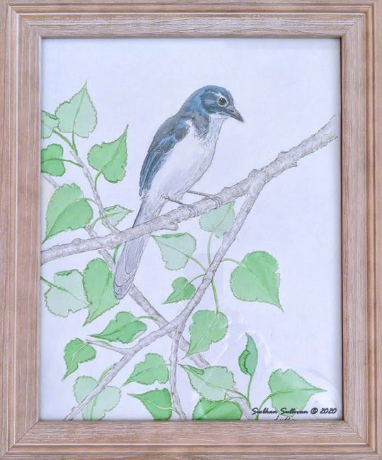 Calm jay by Siobhan Sullivan Oct 2020