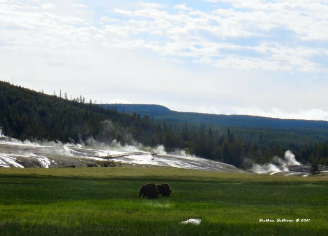 Steam-filled Yellowstone landscape