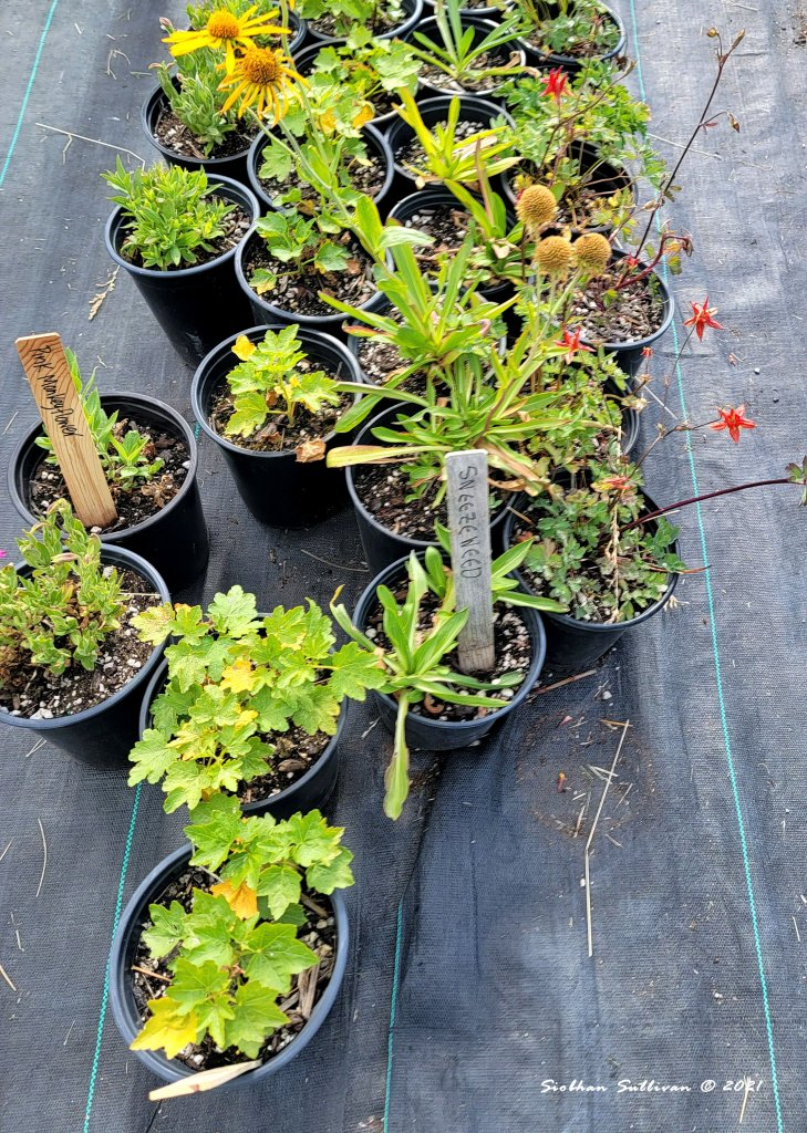 Labeled plants for sale