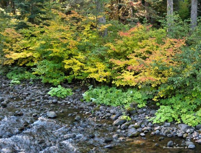 Splashes of autumn