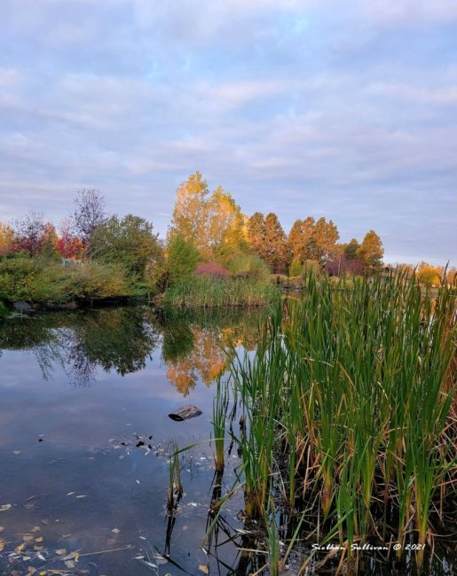 Pine Nursery Pond