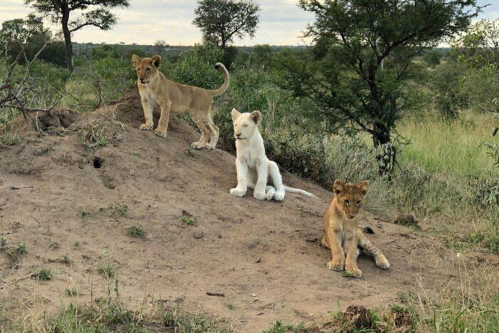 exotic-travel-destinations-safari-1