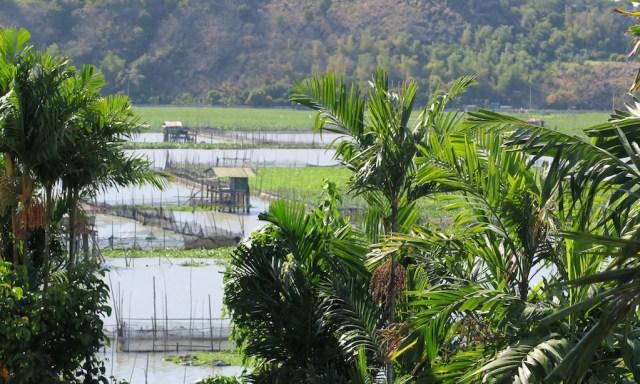 Laguna da Bay. Palmen und Fischerhütten