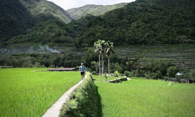 Mann im blauen T-Shirt wandert durch die Reisterrassen von Hapao