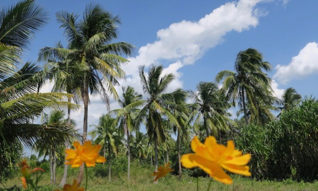 Palmen und orange Blüten im Vordergrund, Moalbaol