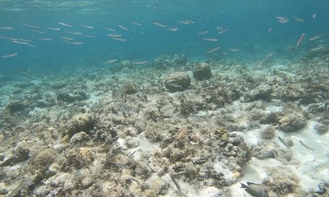 Unterwasserwelt am Tubod Beach in Siquijor
