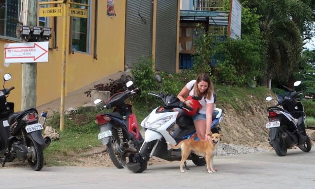 Ein hübsche deutsche Frau streichen einen Straßenhund vom Scooter aus in Siquijor
