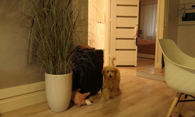 Hunde sind im Appartment Blue Mare Blizej Morza in Kolberg willkommen