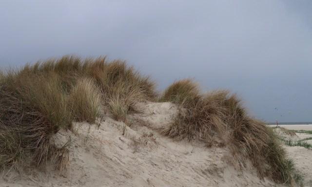 Sanddünenflavour in Sankt Peter-Ording